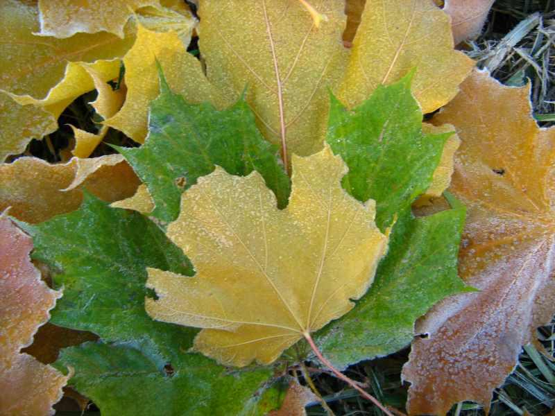 Фото поделок из природного материала листьев